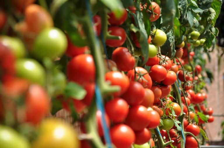 Neem deel aan de uitwisseling met Voka Vlaanderen aan Limburg (Agrofood)